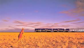 Kangaroo and a train on the plains